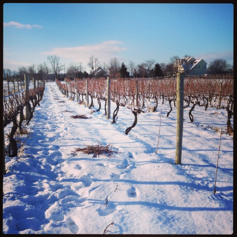 Winter Pruning Has Begun