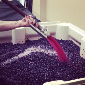 Pumping over a bin of Cab Franc.